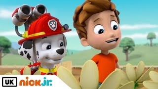 Paw Patrol | Pups Get Growing | Nick Jr. UK