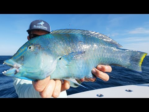 Catching Colorful Fish and a Giant Shark!