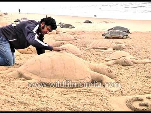Over 150 Olive Ridley turtles found dead on Puri beach, Odisha