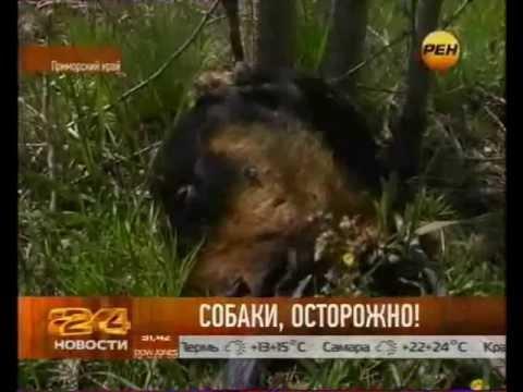 Собак крадут и готовят в ресторанах Уссурийска