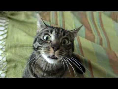 Psycho Cat YouTube