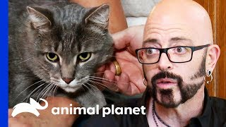 Jekyll And Hyde Cat Only Attacks His Owners At Night | My Cat From Hell