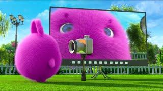 Sunny Bunnies | Boo Found A Camera | SUNNY BUNNIES COMPILATION | Cartoons for Children