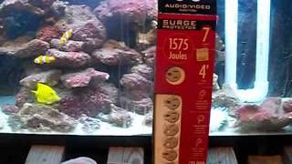 Aquarium Saftey First Drip Loops and Power Surge Protectors