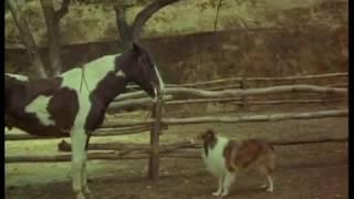 Lassie - Adventures Of Neeka (1968)