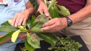 Central Florida Gardening - Leaf Spots