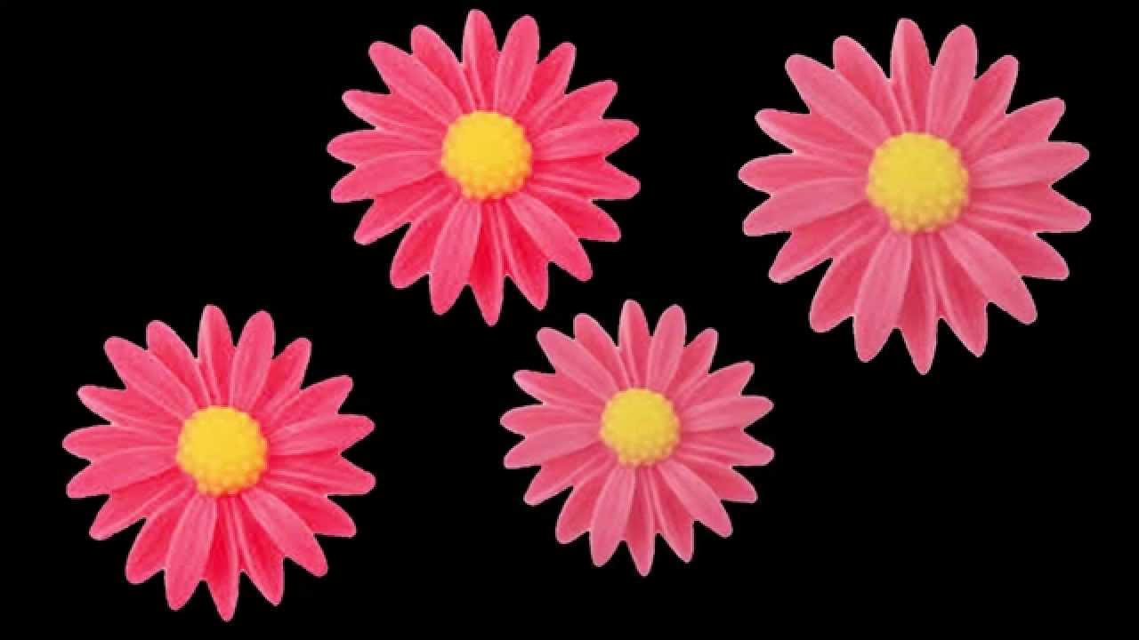 Free HD Floral Loop   Pink Flowers on Black Background ...