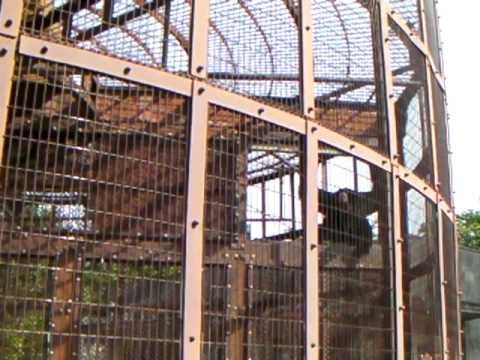東山動物園のおたけびサル