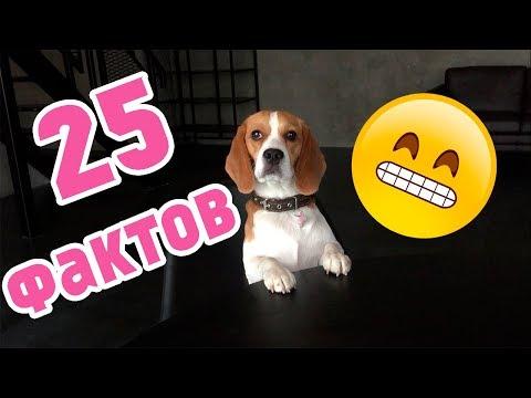 25 ФАКТОВ О ДЖИНЕ! МНОГО ИНФОРМАЦИИ...