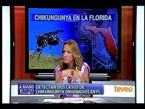 Chikungunya en la Florida - América TeVé
