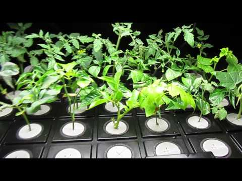DIY Aeroponic Cloner: Roots in 3 Days!!! (Day 5)