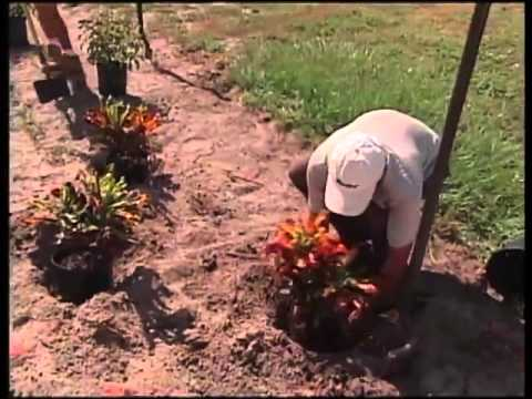 Sustainable Planting for Florida Landscape