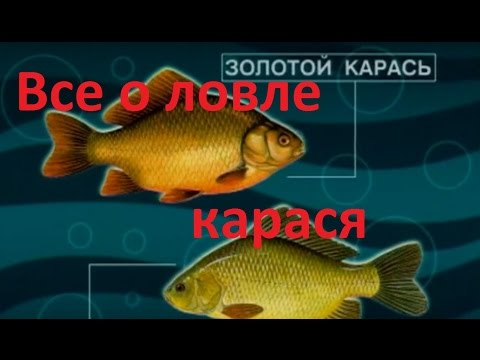 диалоги по части рыбалке карасишка нате пруду