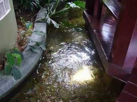Penapis Kolam Ikan Fish Pond Filter Youtube