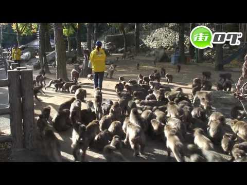 国立公園高崎山自然動物園 - 地域情報動画サイト 街ログ