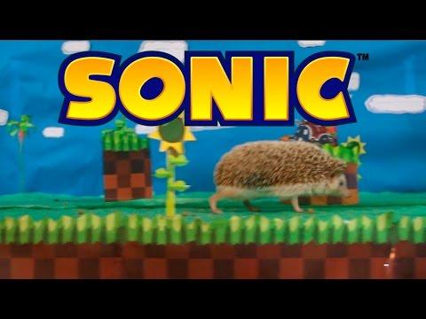 Sonic Na Vida Real - Real Life Sonic The Hedgehog video