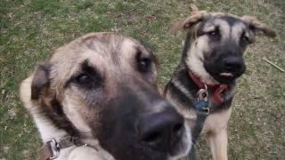 Watch Fixx Calm Animals video