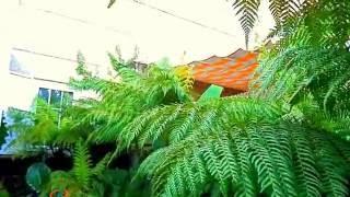 Mi jardin tropical en El Escorial, Madrid