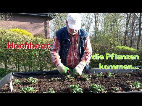 HOCHBEET Die Pflanzen kommen... Film 57