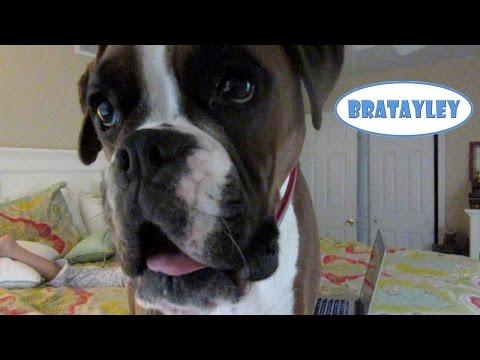 Best Guard Dog EVER! (WK 192.7) | Bratayley