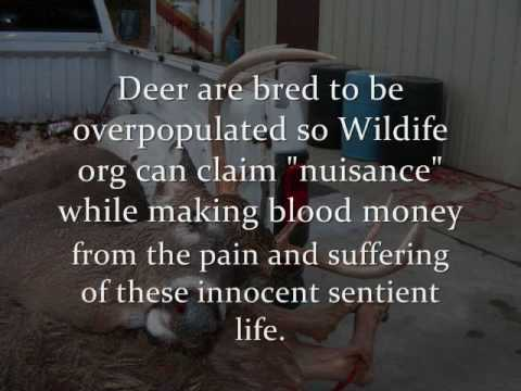 Search Results Funny Poems About Deer Hunting Pictures