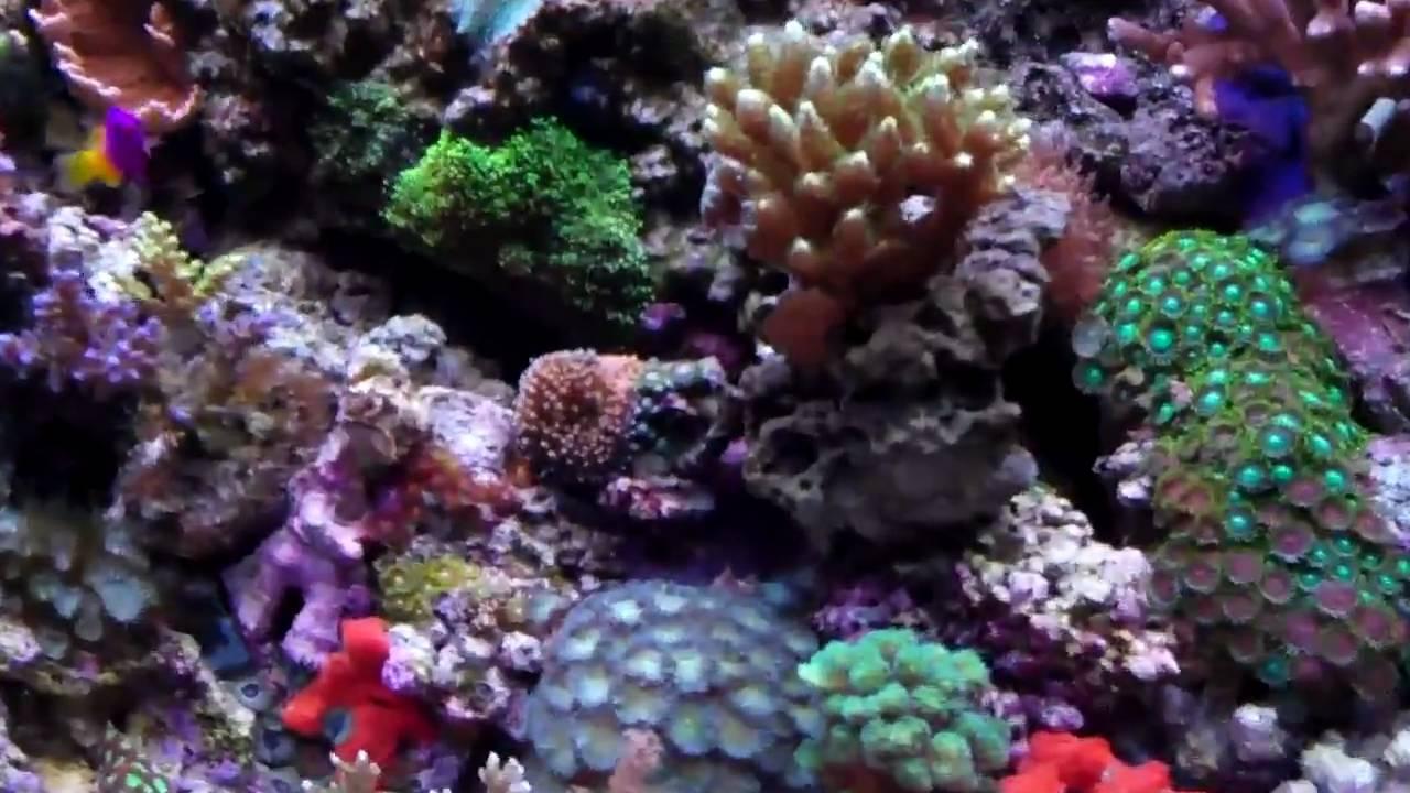 Frank S 46 Gallon Bowfront Reef Tank Aquarium With Hard
