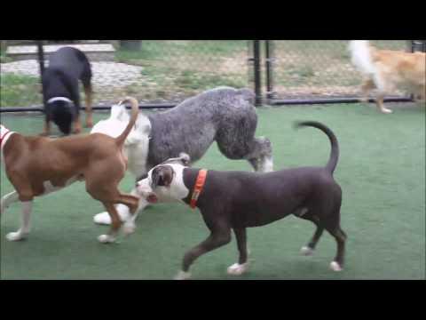 Hooksett New Hampshire Dog Daycare