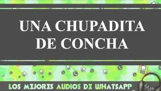 Una Chupadita De Concha - Conversaciones De Whatsapp - Los Mejores Audios Y Videos De Whatsapp