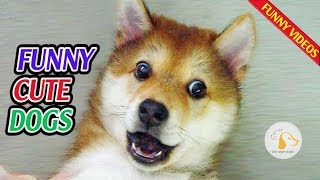 Funny ANIMALS: Try to BLOCK YOUR LAUGH - Best FUNNY ANIMAL compilation#62❤️