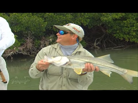Addictive Fishing: Snookin' the Mangroves - GREAT mangrove skipping