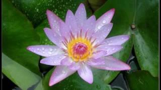 download lagu Imee Ooi - The Pure-land Dharani 拔一切业障根本得生净土陀罗尼 Sanskrit gratis