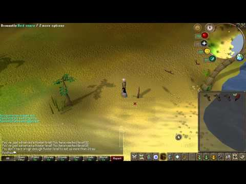 Runescape Hunter Guide Crimson Swifts and Tropical Wagtails, Vlog #2