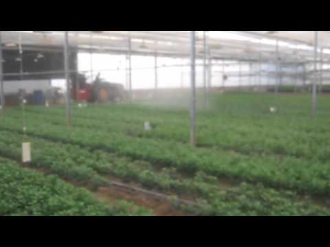 pulsFOG Plant Protection Application in Greenhouse with a pulsFOG TracFOG ULV Cold Fogger