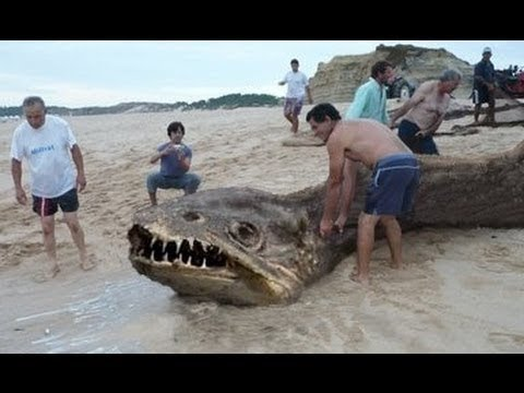 10 sea Creatures You Won't Believe Exist [1080p Available] - YouTube