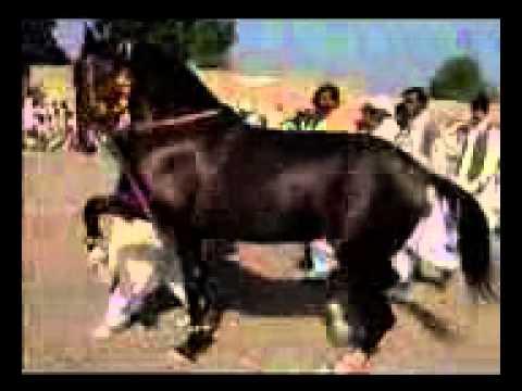 Horse Dance Mela Ghulam Shah 1998 Part 2