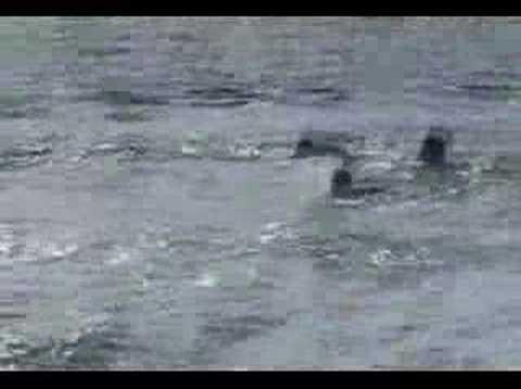 salvavidas ahogados
