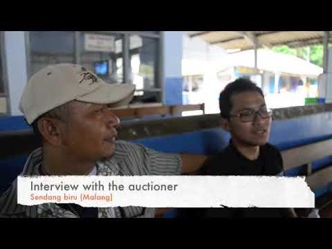 Indonesian artisan tuna fishing economies