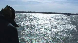 Lower Niagara Steelhead and Lakers - GET-REEL Fishing