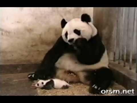 Cute & Funny Collection Of Animal Videos