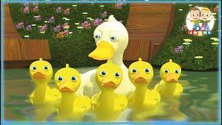 Five Little Ducks   Nursery Rhymes for kids