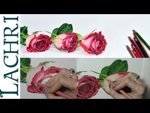 Tips on how to draw a rose in colored pencil w/ Lachri