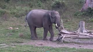 Buxa tiger reserve jungle safari Dooars