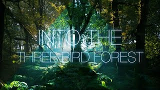 Into The Three Bird Forest