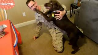 Funny Dogs Welcoming Soldiers Home