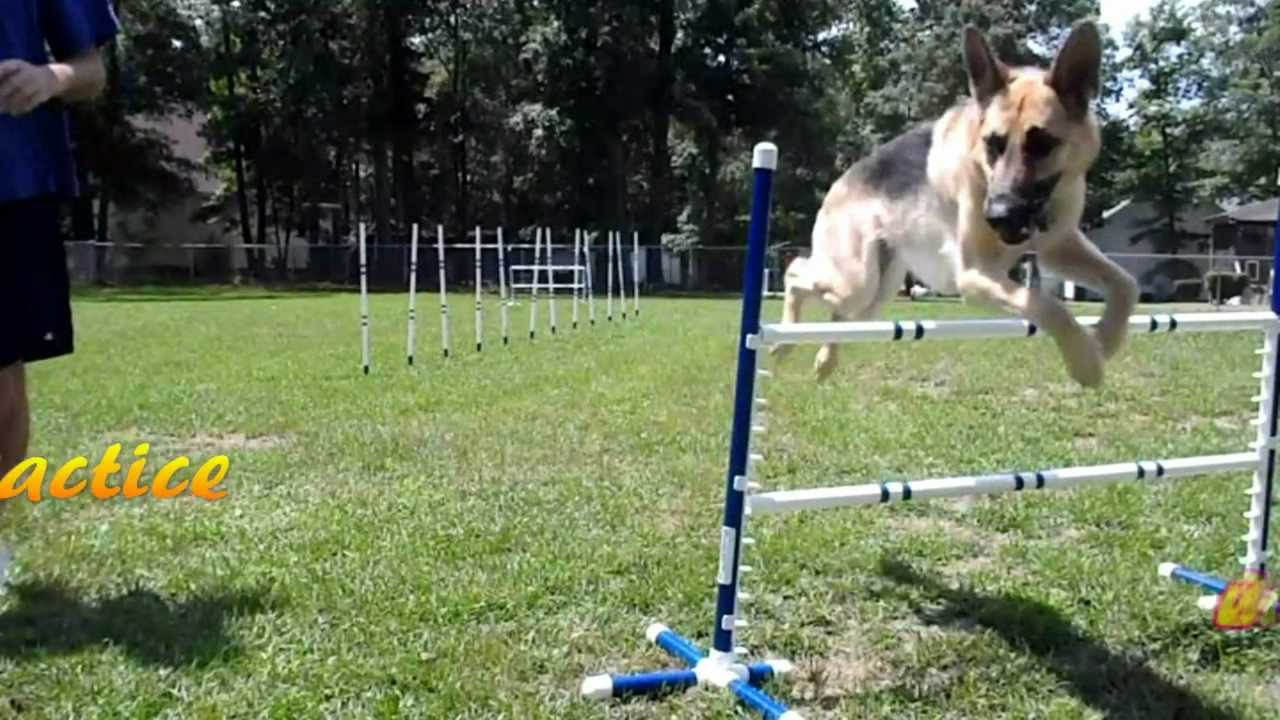 how to make hamster agility equipment