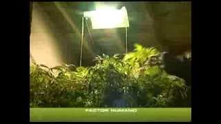 COME COLTIVARE INDOOR ¦ TUTORIAL ITA ¦ PARTE 3 ¦ KUSHWEED