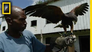 Professionals Reveal Secrets of Falconry