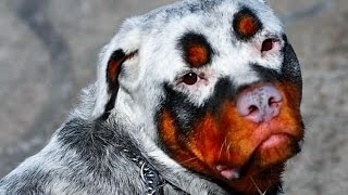 15 STRANGEST Animal Markings
