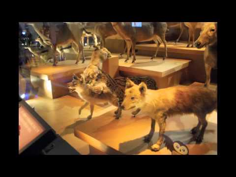 The stuffed animals (National Museum of Nature and Science,Tokyo,Japan) 国立科学博物館