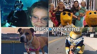 Baseball games. dog shows, festivals, and princesses